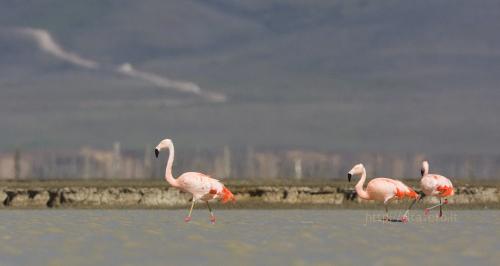 flamingai_9