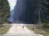 Biržų giria