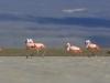 flamingai_1