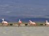 flamingai_3