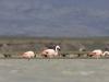 flamingai_4