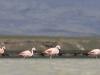 flamingai_5