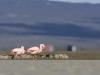 flamingai_6