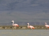 flamingai_7