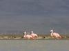flamingai_8